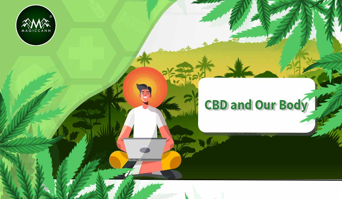 CBD and Our Body